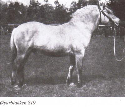 ØYARBLAKKEN N 819